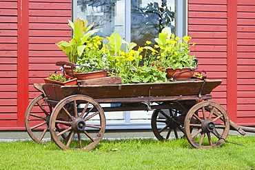 Old cart with flowers, Trakai, Lithuania