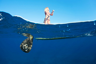 Hawaii, Maui, Woman stand up paddling in ocean just off Canoe Beach, Over/under view.