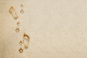 Hawaii, Oahu, Footprints and pawprints in the sand.