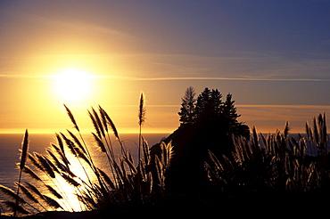 California coast, Reeds illuminated by bright sunset over ocean.