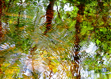 Water Abstract 18, Massachusetts, Seekonk, Caratunk Wildlife Refuge, Ripples and reflections on water surface.