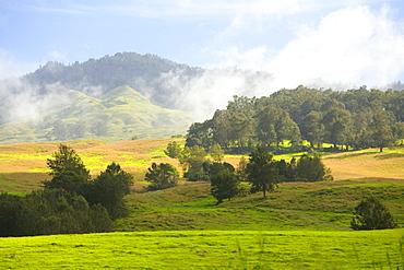 Hawaii, Maui, Upcountry scenic near Ulupalakua, Rolling green hills.