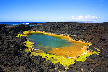 Hawaii, Maui, Makena, Ahihi Kinau Natural Reserve, Anchialine pond.