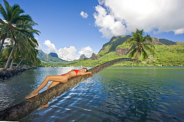 French Polynesia, Tahiti, Moorea, Beautiful young woman laying on a palm tree .