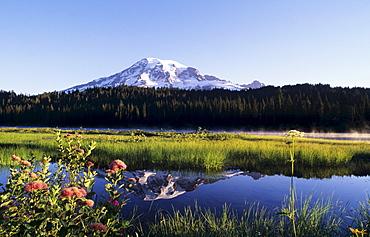 Washington, Mount Rainier National Park, Landscape of Mount Rainier and Reflection Lake, Mountain spiraea in foreground.