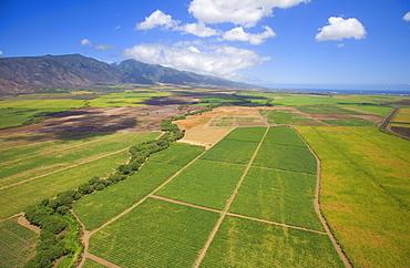 Hawaii, Maui, Aerial of inland fields.