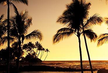 Hawaii, Big Island, Mauna Lani Resort, Ocean and silhouetted palm trees at sunset.