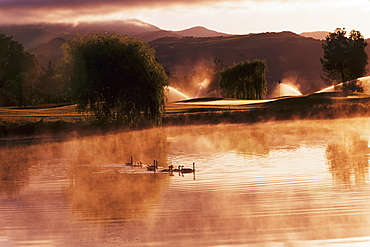 California, Sonoma, Sonoma Golf Course, Ducks on misty pond at sunrise.