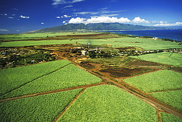 Hawaii, Maui, Paia Sugar Mill, Aerial of cane fields
