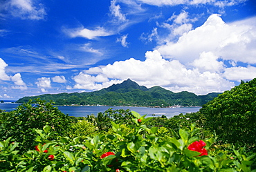American Samoa, Pago Pago Harbor, greenery and flowers, clouds in sky