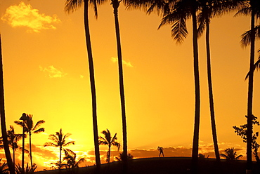 Silhouette of palm trees and female stretching on horizon at sunset with orange sky