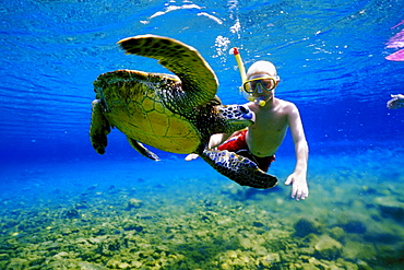Hawaii, young boy snorkeling underwater with green sea turtle