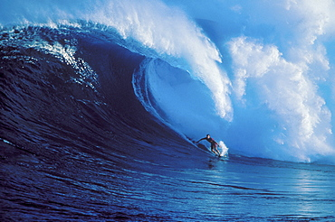 Hawaii, Maui, North Shore, Buzzy Kerbox surfs huge wave crashing behind Peahi AKA Jaws