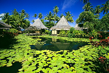 French Polynesia, Tahiti, Bali Hai Hotel, lily pads, thatched huts, palms A58A