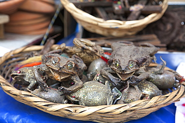 Dried Frogs Sprinkled With Gold Dust (A Good Luck Charm) For Sale At The Mercado De Las Brujas (Witches' Market) On Calle Linares In La Paz., La Paz Department, Bolivia