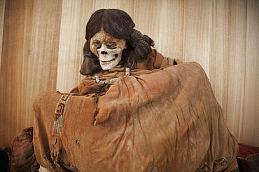 Mummy On Display At The Archaeological Museum R. P. Gustavo Le Paige, San Pedro De Atacama, Antofagasta Region, Chile