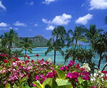 Hawaii, Oahu, Diamond Head, Palm Trees, Waikiki Beach, Colorful Pink Flowers, B1508