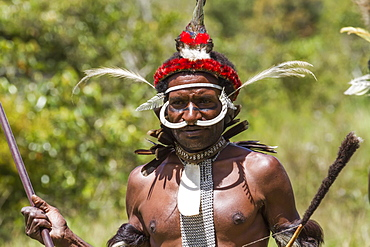 Dani man wearing bones on his nose and an elaborate headdress of bird of paradise or cassowary feathers, Obia Village, Baliem Valley, Central Highlands of Western New Guinea, Papua, Indonesia
