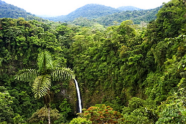Waterfall Surrounded By Forest, La Fortuna, Costa Rica