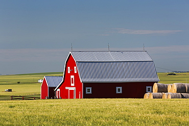 Bright red barn with round hay bales in green grain field with blue sky, Alberta, Canada