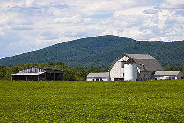 Barn and shed with soya bean field in foreground, Bromont, Quebec, Canada