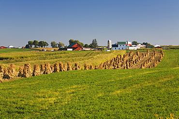 Corn shocks and an Amish farm, near Edgewood, Iowa, United States of America