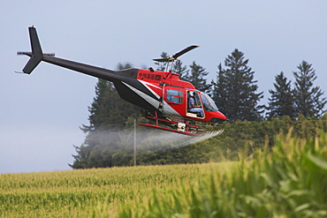 Crop dusting helicopter spraying a corn field, Iowa, United States of America