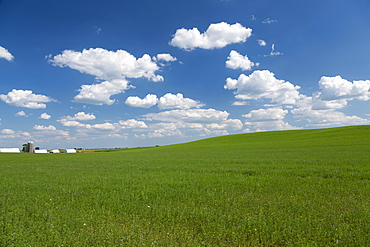 Scenic view of an alfalfa field on a sunny day, Iowa, United States of America