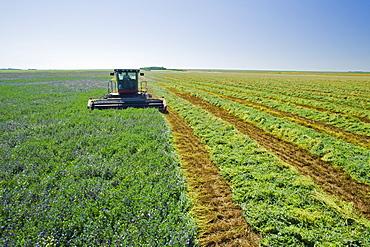 Cutting alfalfa, near Ponteix, Saskatchewan, Canada