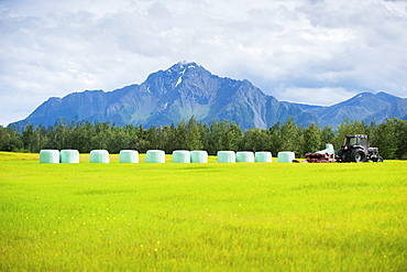 Haylage on a farm, Palmer, Alaska, United States of America