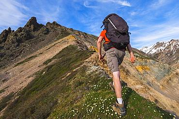 A backpacker climbs a steep ridge in the eastern Alaska Range near Whistler Creek; Alaska, United States of America