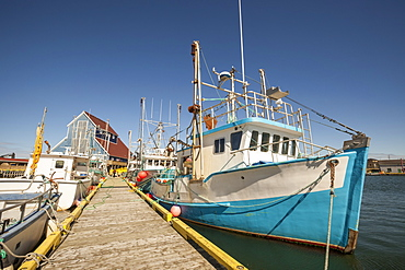 Fishing boats docked in a harbour along a wooden dock on the Atlantic coast; Newfoundland, Canada