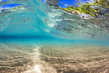 Coastline foliage can be seen through a small wave as it passes over a shallow sandy bottom off the island of Maui, Maui, Hawaii, United States of America