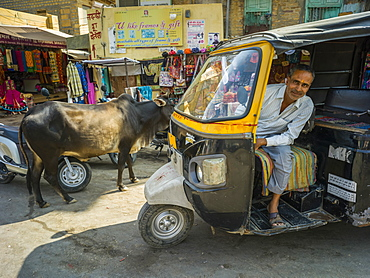 Auto rickshaw driver posing in his rickshaw with a cow on the street, Jaisalmer, Rajasthan, India