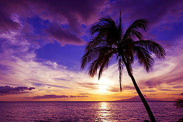 Palm tree at sunset, Kihei, Maui, Hawaii, United States of America