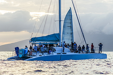 Tourists whale watching from sailboat, Lahaina, Maui, Hawaii, United States of America