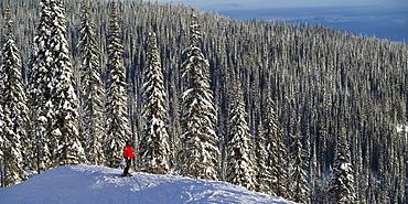 Skier Skier standing with a vast forest behind him, Sun Peaks Resort, Kamloops, British Columbia, Canada