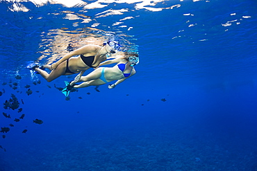 Two young women free diving with black triggerfish (Melichthys niger), Molokini Marine Preserve off the island of Maui, Maui, Hawaii, United States of America