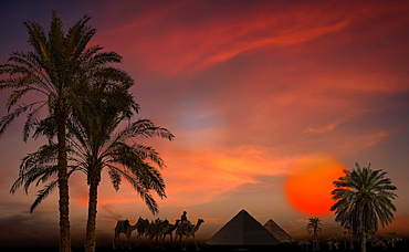 Composite image of silhouetted pyramids, palm trees and a soldier with camels at sunset