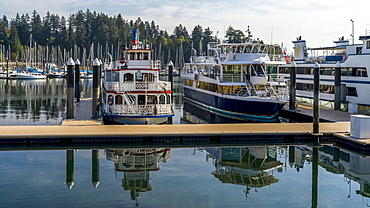 Yachts and sailboats moored in a tranquil harbour, Bayshore West Marina, Stanley Park, Vancouver, British Columbia, Canada