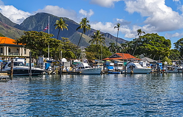 Lahanina harbour with palm trees and a view of the West Maui mountains, Lahaina, Maui, Hawaii, United States of America