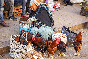 Eritrean woman selling chickens at the Mercato of the indigenous people, Asmara, Central Region, Eritrea