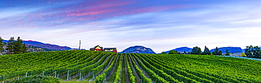 Vineyard and Cascade Mountains at dusk, Okanagan Valley, British Columbia, Canada