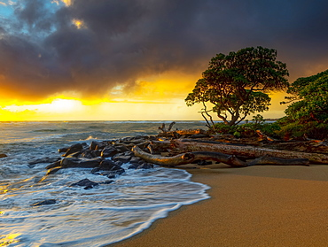 Sunrise over driftwood and rocks on a Hawaiian shore, Kauai, Hawaii, United States of America