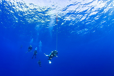 Divers pictured hanging at 15 feet for a decompression stop before surfacing. The diver in the lead has released a safety float to mark their position to boats above, Maui, Hawaii, United States of America