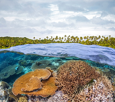 Split view with a coral reef below the water's surface and palm trees covering the island above, Fiji
