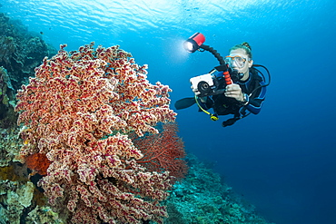 A photographer lines up with a camera in a housing to shoot a large red soft coral fan, Indonesia