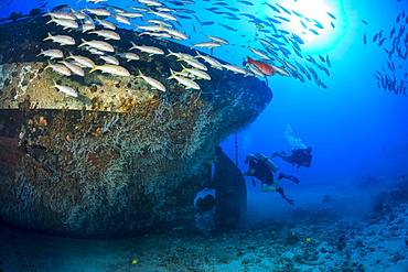 Divers exploring the prop and rudder at the stern of The Carthaginian, a Lahaina landmark, that was sunk as an artificial reef off Lahaina, Maui, Hawaii in December 2005, Maui, Hawaii, United States of America