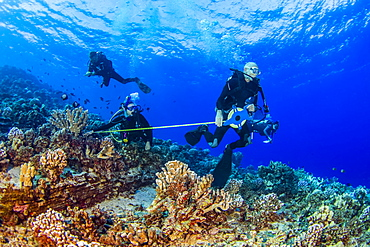 Research divers from the MOC Marine Institute map out coral damage at Molokini Marine Preserve off the island of Maui, Hawaii. In the future, data from here will help to determine the health of Hawaii's reefs, Maui, Hawaii, United States of America