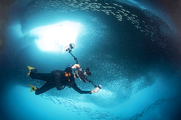 A photographer under a massive school of millions of sardines, Moalboal, Cebu, Central Visayas, Philippines